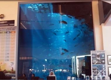 Aquarium Kasse, ohne Eintritt zu bezahlen