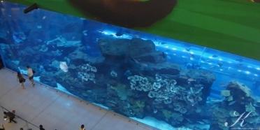Aquarium von oben